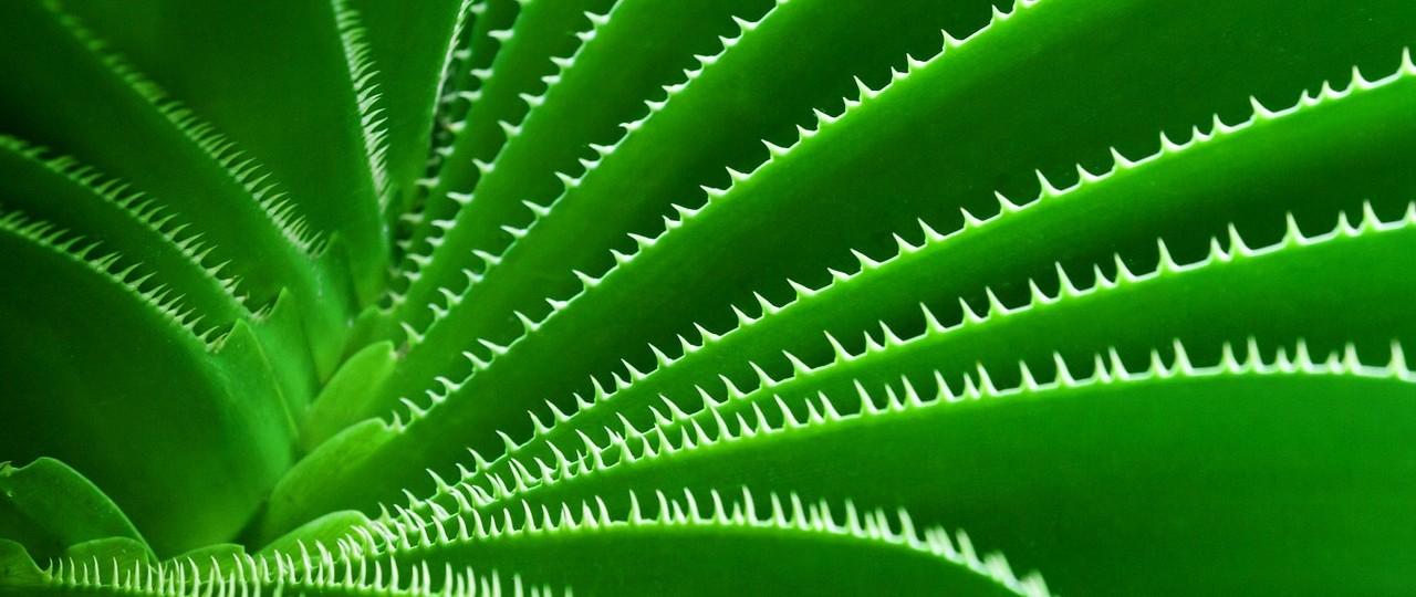 kaktuszrost matrac